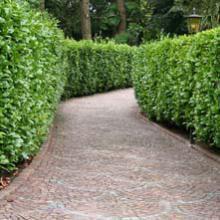 V g taux de p pini re plantes d 39 ext rieur jardinerie for Vegetaux exterieur