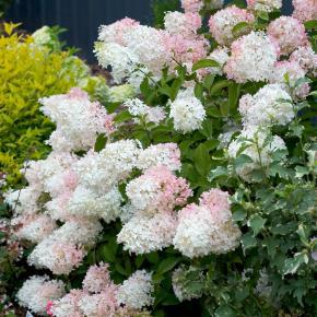 Derly p pini re jardinerie et animalerie derly dans l - Presentoir plantes exterieur ...