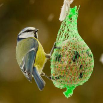 nourriture oiseaux du ciel nourriture derly