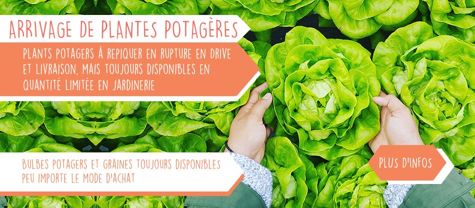 Occupez-vous pendant la quarantaine : faites pousser votre propre nourriture !