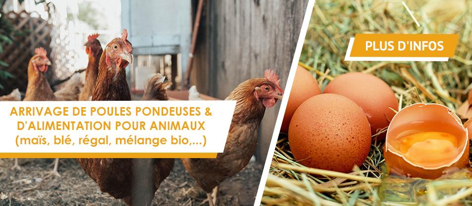 Arrivage de poules pondeuses et d'alimentation animale !