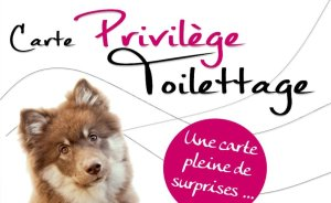 Le service toilettage : La carte avantages
