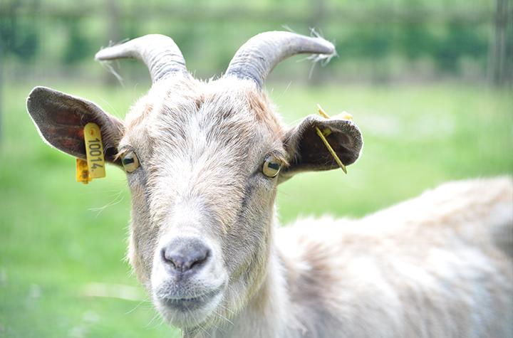 mini zoo de la Jardinerie Pépinières Animalerie Derly, Eure