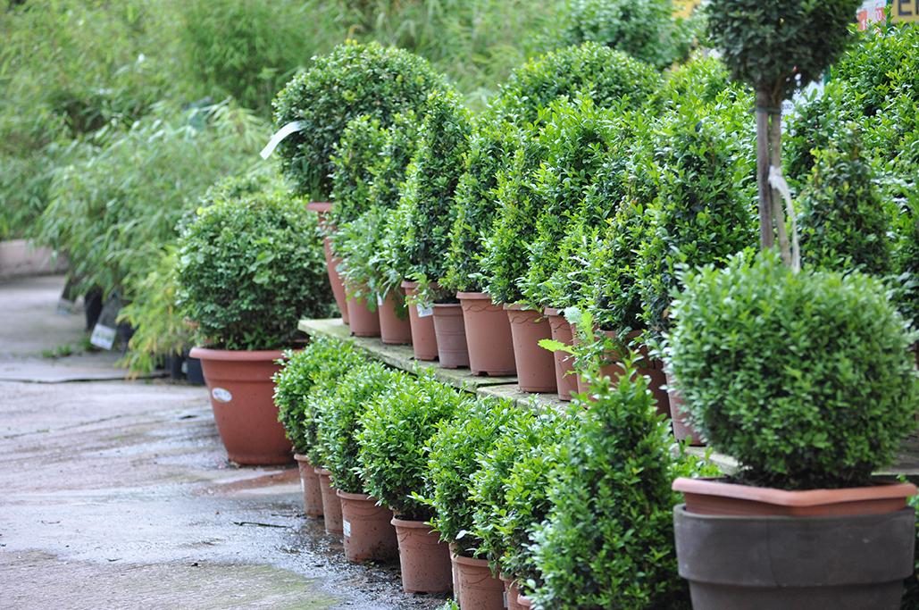 végétaux  Pépinières Derly 27